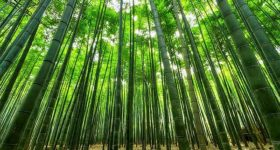 How does your business compete? Wide angle picture of dense bamboo grove