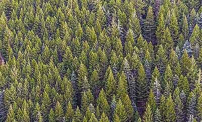 ustainability-reporting-seeing-wood-for-the-trees