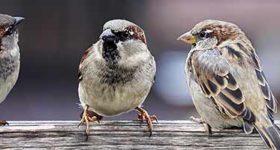 Social impact - social sparrows