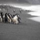 Biodiversity-chinstrap-penguins-baily-head