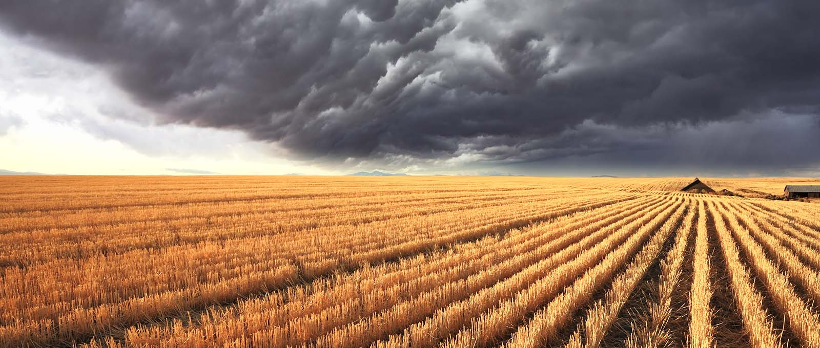 Sustainability Consultancy London - Storm Clouds over Harvest Montana