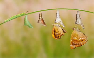 Transformational-incremental-change