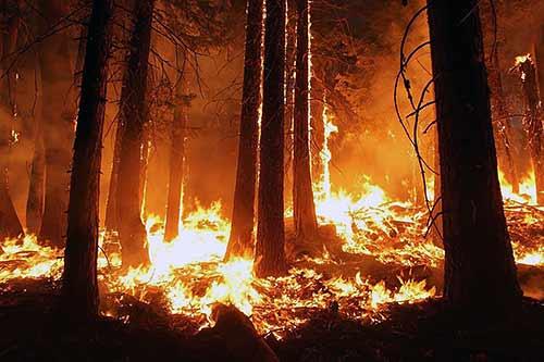Climate 2020 | Photo of forest/bush fire | Credit: Skeeze Pixabay