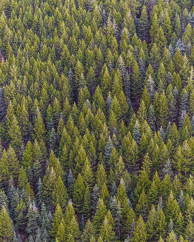 Sustainability reporting - can you see the wood for the trees?